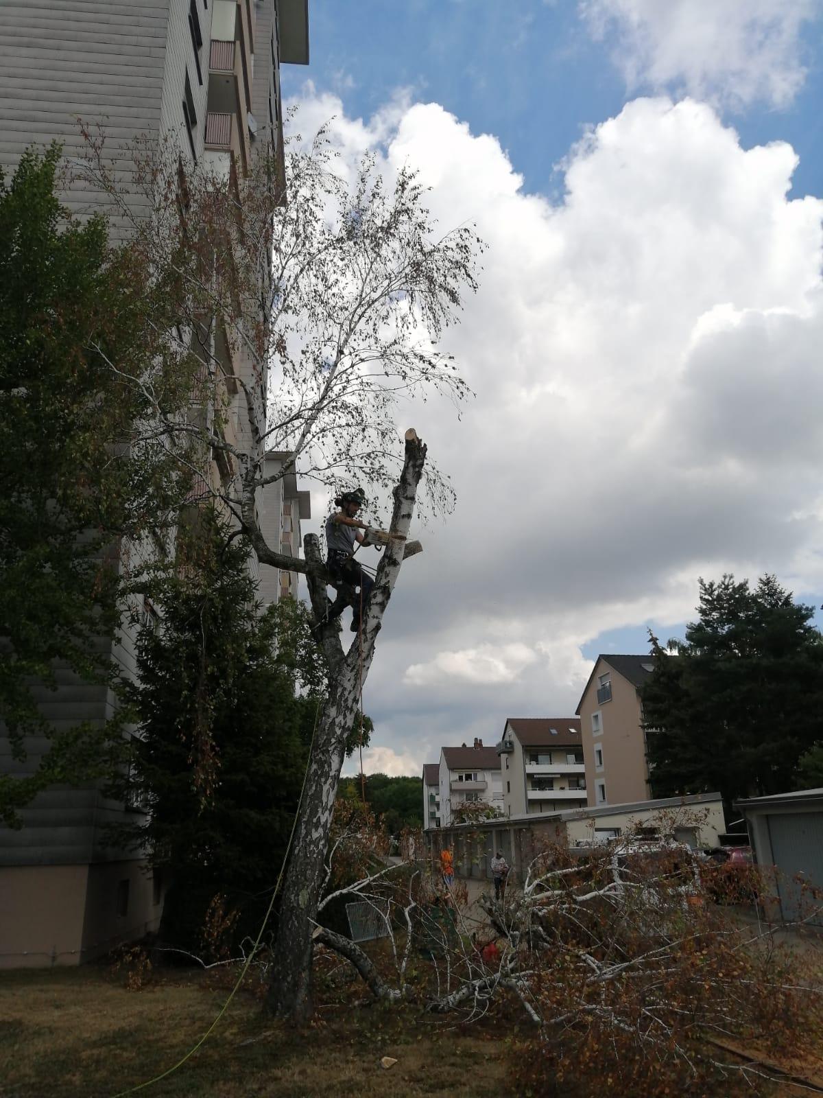 Baumschnitt und Baumfällung